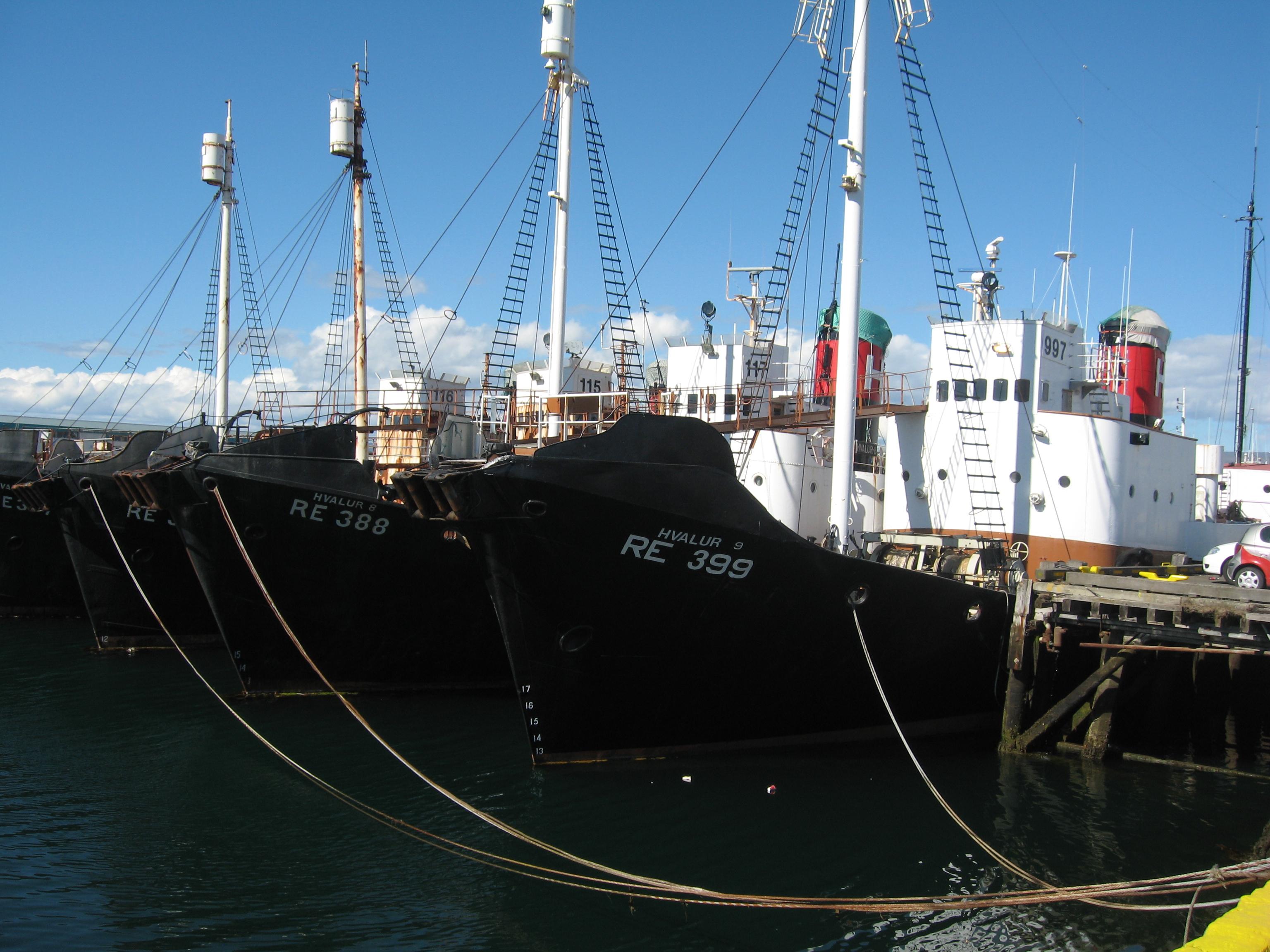 Icelandic_whalers_08